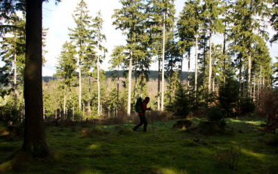 Wanderbericht: Der Rennsteig im Thüringer Wald von Hörschel nach Blankenstein
