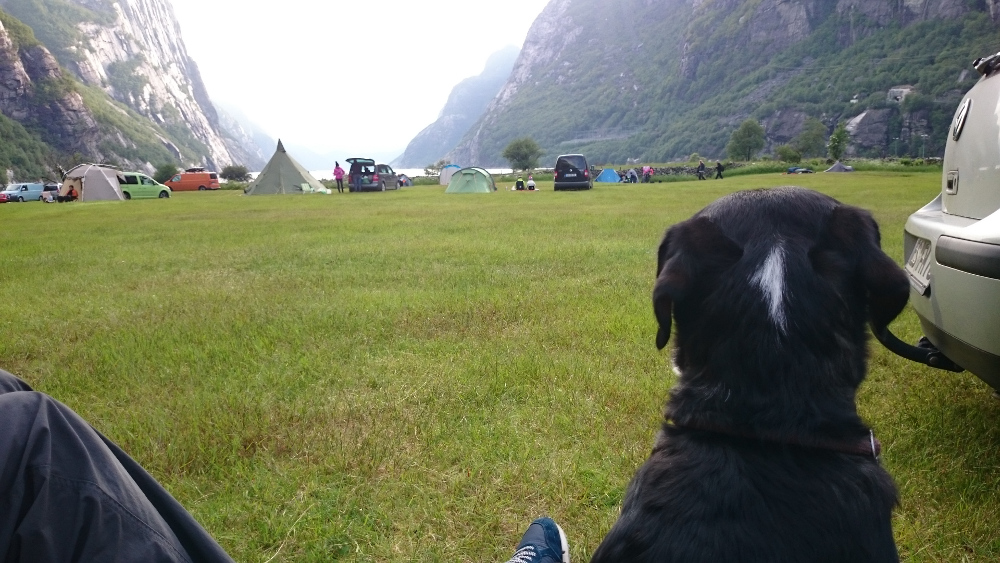 Sooo viele Zelte, da sind bestimmt auch viele andere Hundekumpels, mit denen ich spielen kann.....