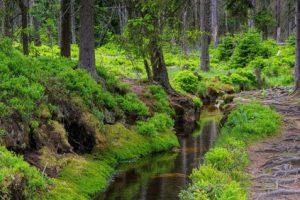 Torfhausmoor - swamp Torfhausmoor 01