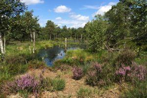 Moos- und Wasserflächen wechseln sich im Pietzmoor ab. Etappe 5 auf dem Heidschnuckenweg.