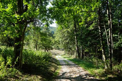 Der Albsteig Etappe 14 - dieser Etappe führt ins schöne Ratshausen.