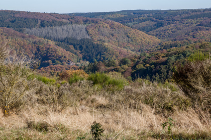 Der Eifelsteig Etappe 13 - auch hier gibt es wieder eine wunderschöne Landschaft zu sehen. Das Ziel ist Bruch.