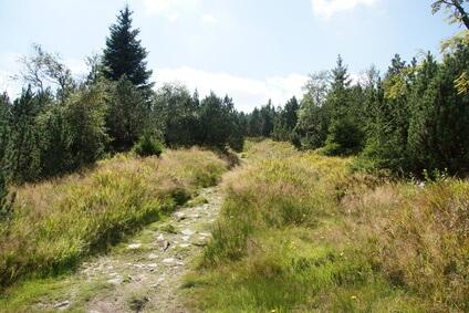Etappe 10 Kammweg - auf dem Weg nach Johanngeorgenstadt
