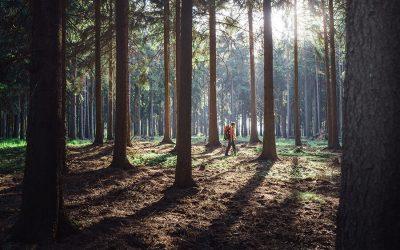 Forststeig – Über Wurzel und Fels durchs Elbsandsteingebirge